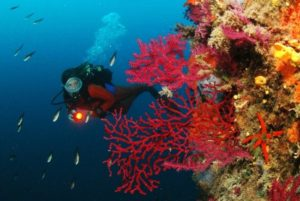 Fréjus Plongée sous marine